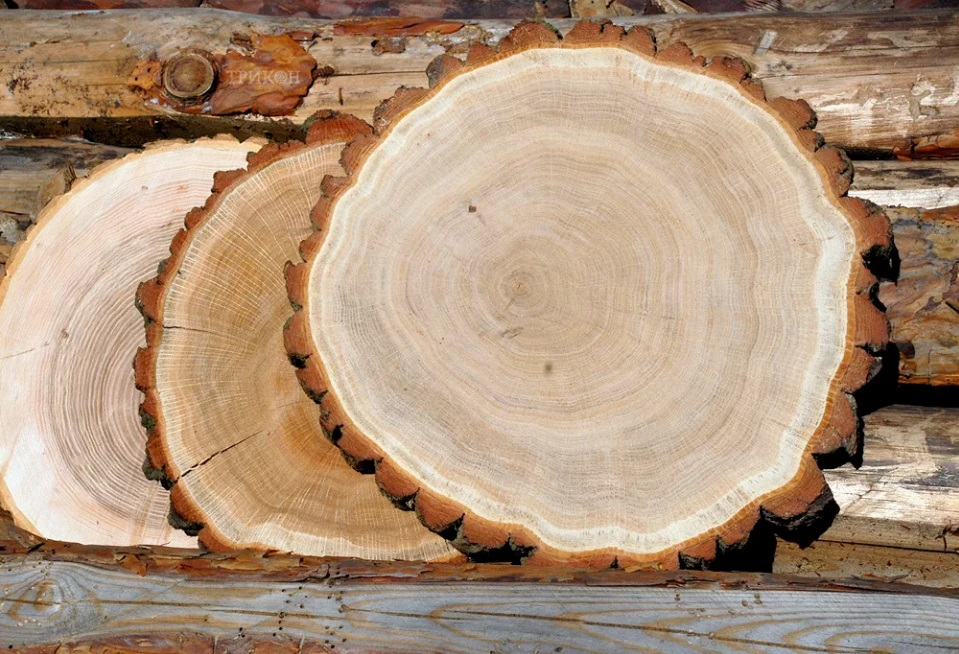 Древесина дуба в строительстве бани